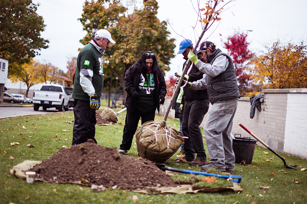 Residents, staff and volunteers plant trees in Chester Le